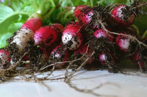 Cultivos primer huerto