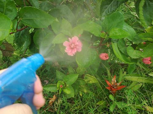 Usos del bicarbonato en jardineria