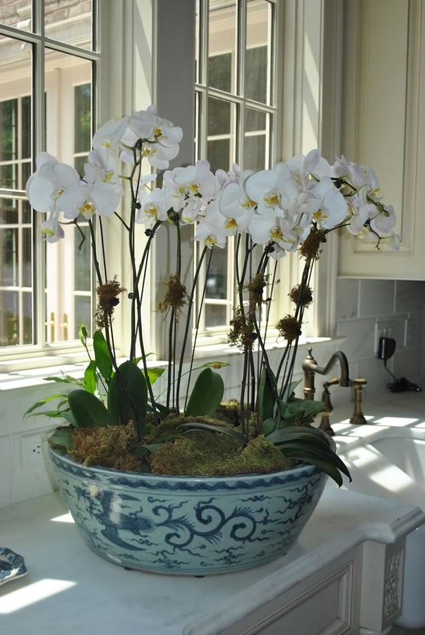 Donde cultivar orquídeas