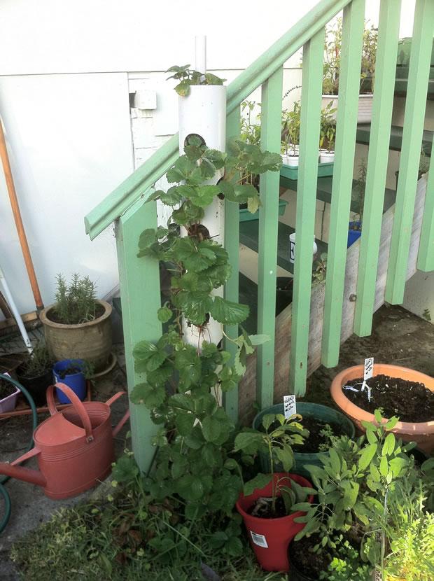 Cultivo vertical fresa
