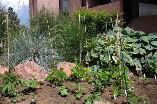 Plantas que indican la calidad del aire 2