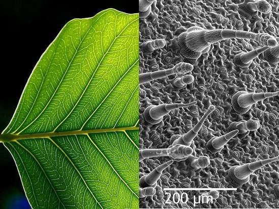 Plantas que indican la calidad del aire 3