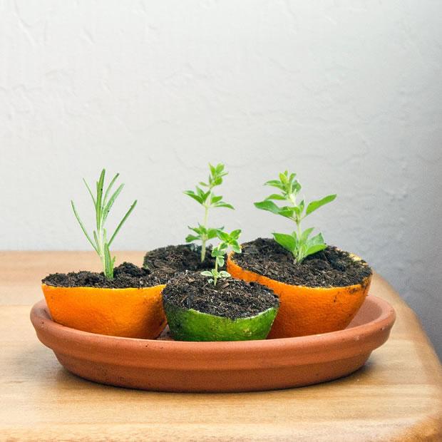 Semilleros con cáscaras naranja