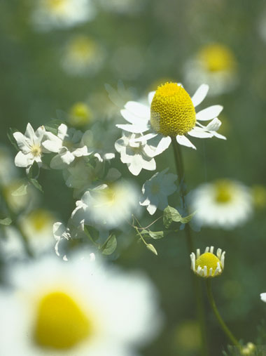 Cultivos para el estado de ánimo