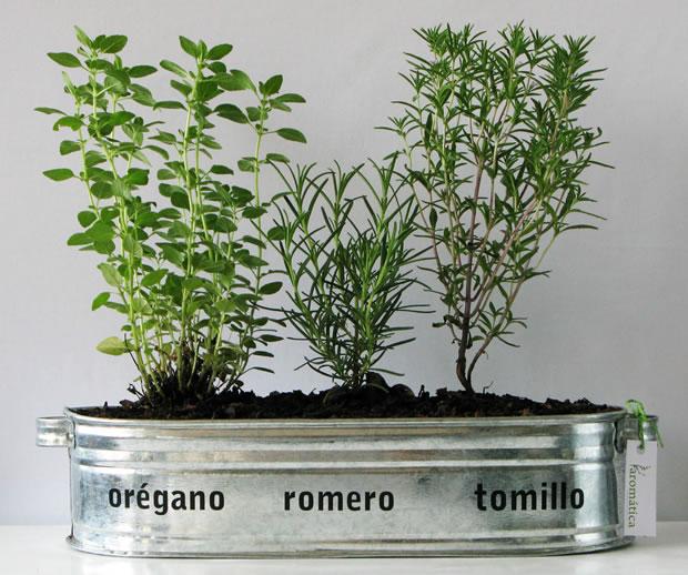 Cultivo hierbas