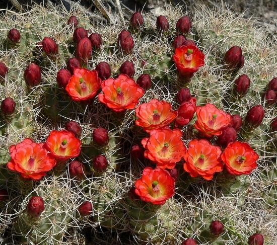 Cactus zonas frías
