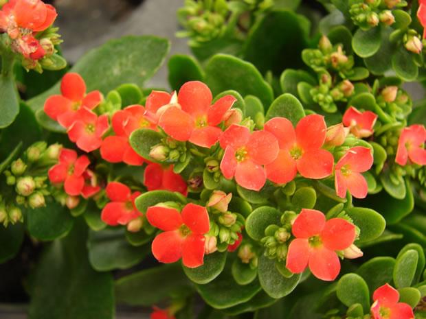 Plantas interior poca luz