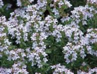 imagen Usos de especies para el control de plagas en el huerto