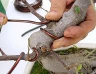 imagen El alambrado del bonsái
