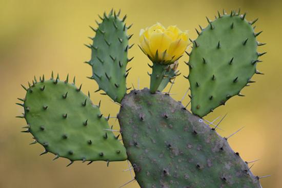 Cactus de clima frío 1
