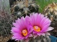 imagen Variedades de cactus para cultivar en zonas de clima frío