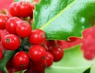 imagen Plantas para desear buena fortuna en Navidad
