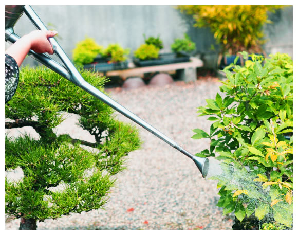 Riego del bonsai 1