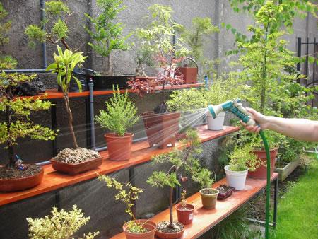 Riego del bonsai 3