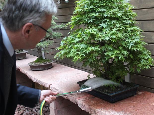 Riego del bonsai 4