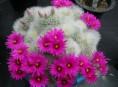 imagen Cultivo decorativo de suculentas