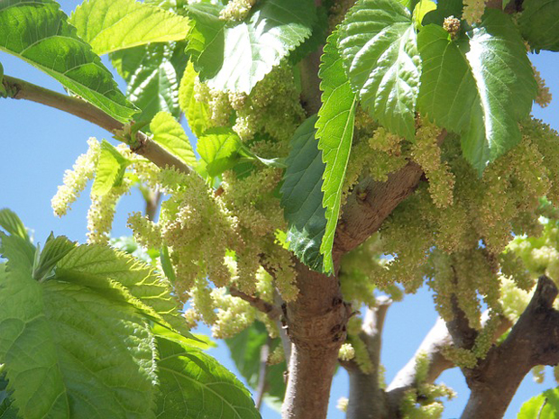 Mi jardin guia de jardineria jardines y plantas for Arboles frutales de hoja caduca