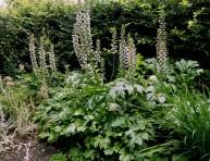 imagen El acanto común: la planta ornamental por excelencia