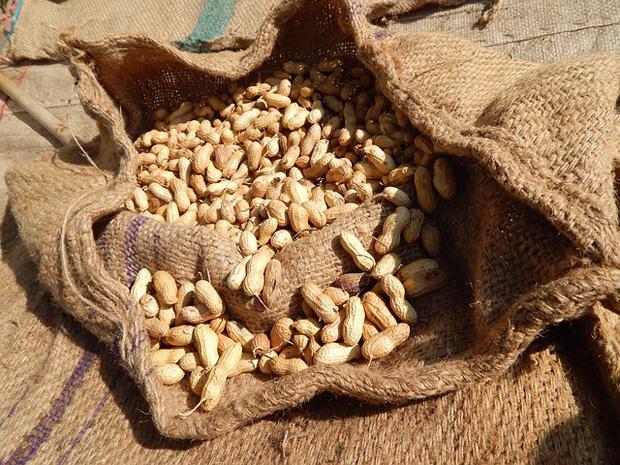 Cultivo de cacahuetes 2