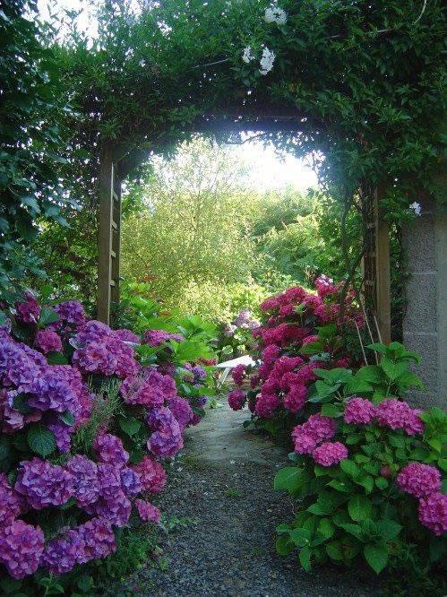 la belleza de las hortensias en tu jard n y hogar