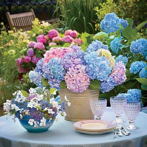La belleza de las hortensias en tu jard n y hogar for Jardin shakespeare 2015