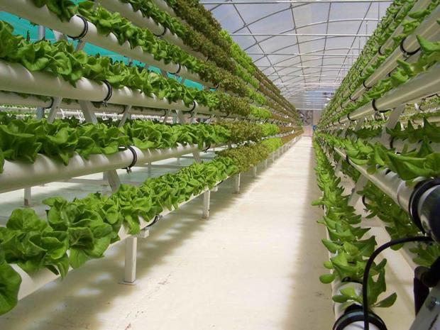 Cultivos hidropónicos 2