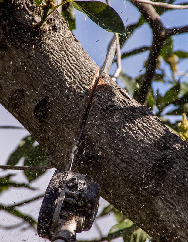 Poda de árboles 2
