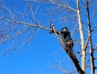 imagen Cómo podar adecuadamente a un árbol