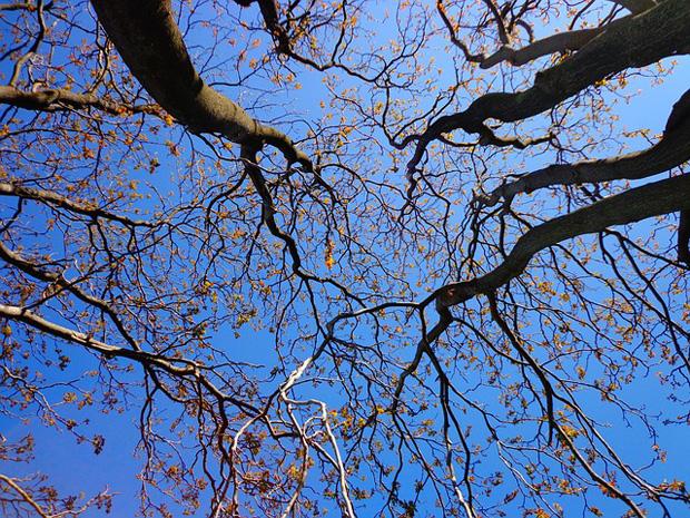 Poda de árboles 4