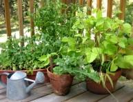imagen 11 frutas y vegetales que puedes cultivar en jardineras