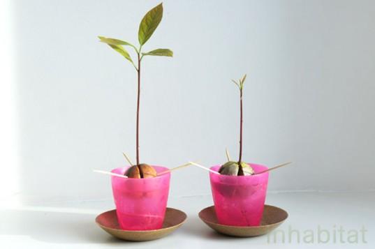 Consejos para cultivar aguacate 8