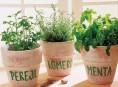 imagen 10 errores comunes en el cultivo de aromáticas