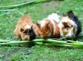 imagen Qué hierbas cultivar para alimentar a roedores