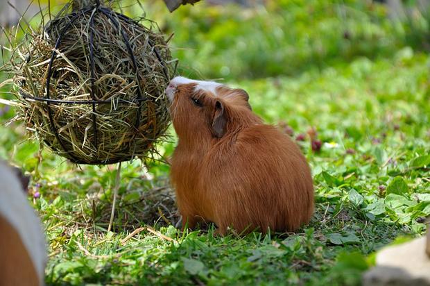 Hierbas para roedores 5