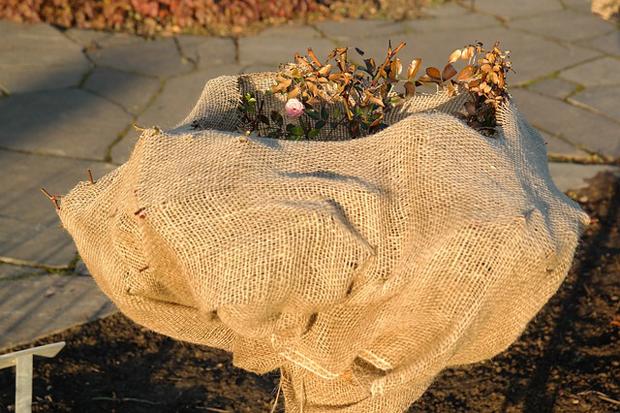 Cuidados de invierno para plantas 1