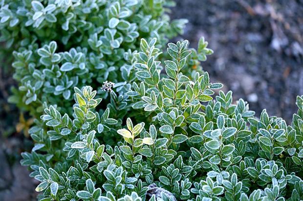 Cuidados b sicos de las plantas en invierno - Plantas de invierno ...