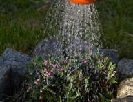 imagen Cuántas veces se debe regar una planta