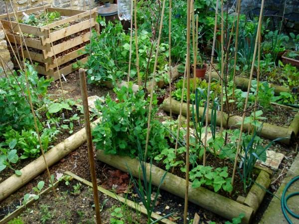 Cultivo en camas elevadas 1
