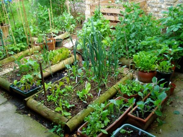 Raised vegetable garden layout - Ventajas Y Desventajas Del Cultivo En Camas Elevadas