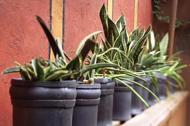 Plantas de interior 4