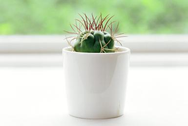 Plantas de interior 6