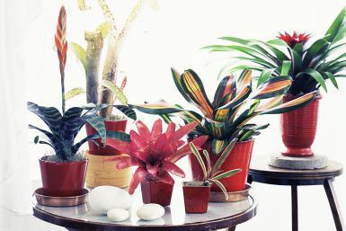 Las 7 mejores plantas de interior para principiantes - Las mejores plantas de interior ...