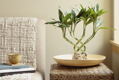 Plantas de interior 8