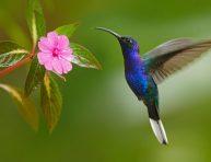 imagen Algunas de las mejores plantas para atraer colibríes al jardín