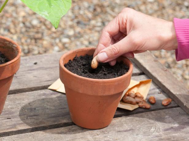 Cultivo reciclar 4