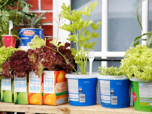 Cultivo reciclar 6