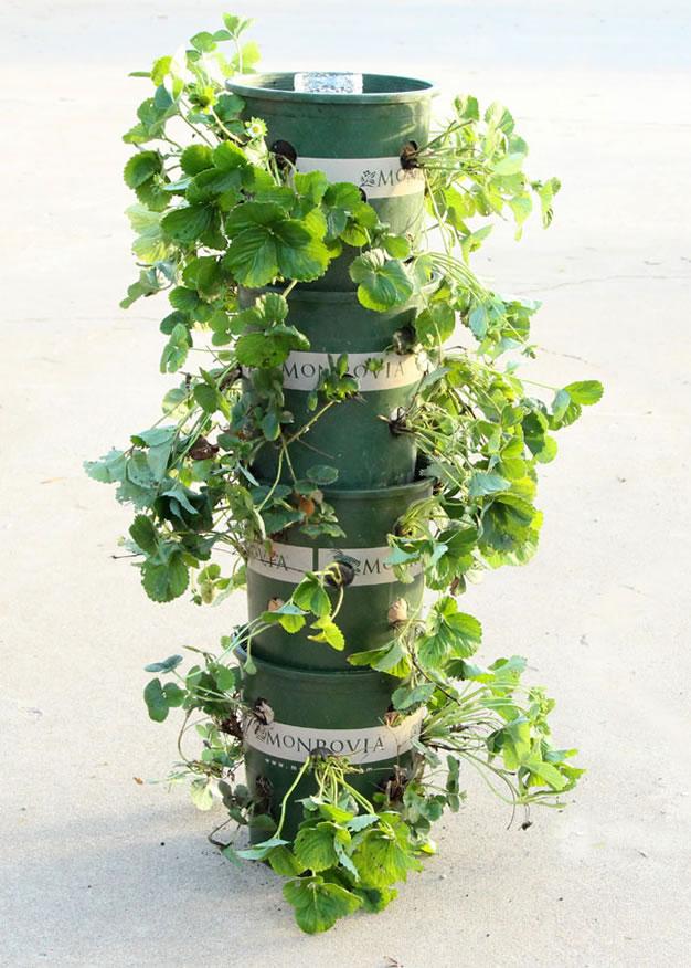 Torre De Macetas Para Cultivar Fresas