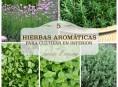 imagen 5 hierbas aromáticas para cultivar en interior