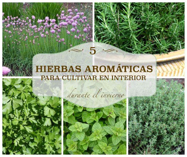 hierbas aromáticas para cultivar en interior