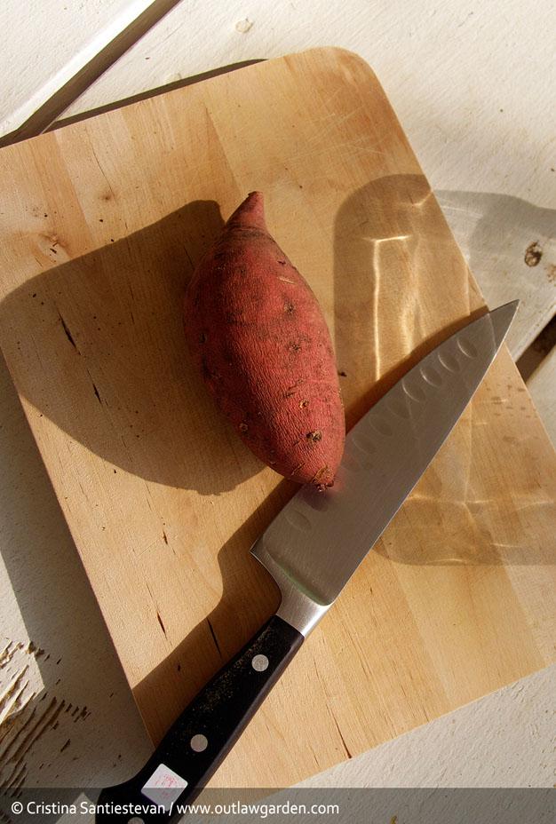 como-cultivar-batata-1
